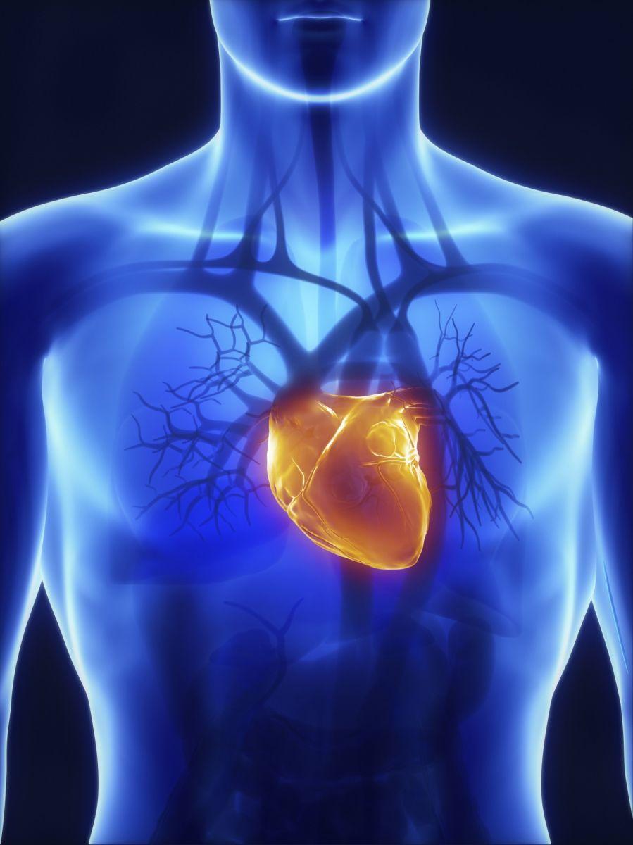 Resultado de imagen de La medicina regenerativa
