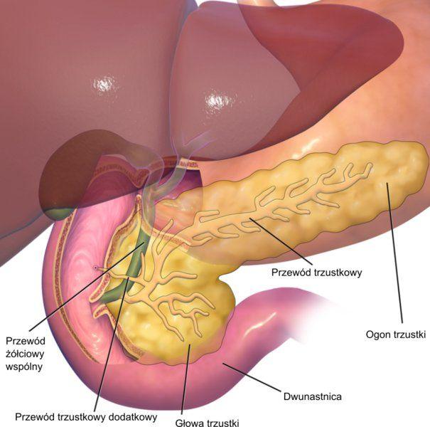 Desregulación de la cromatina en el cáncer de páncreas - Medicina ...